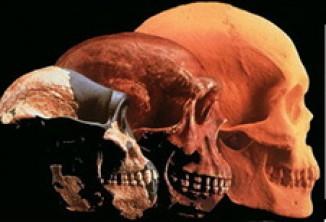 skulls_3