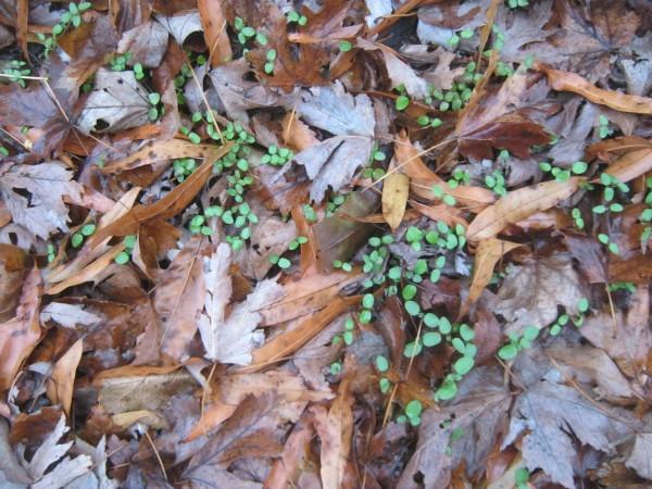 dead leaves green plants