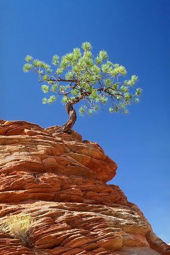 tree cliff