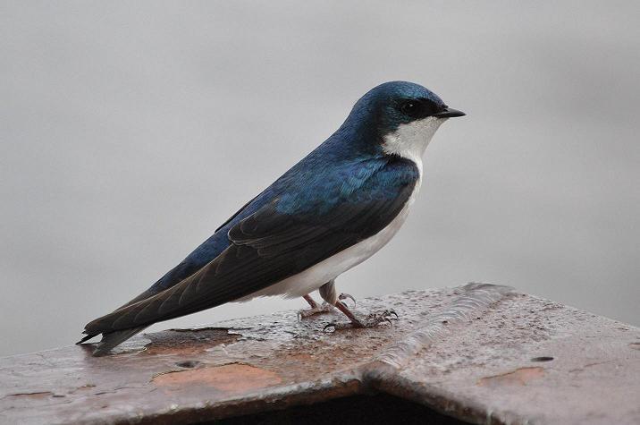 mike bird2