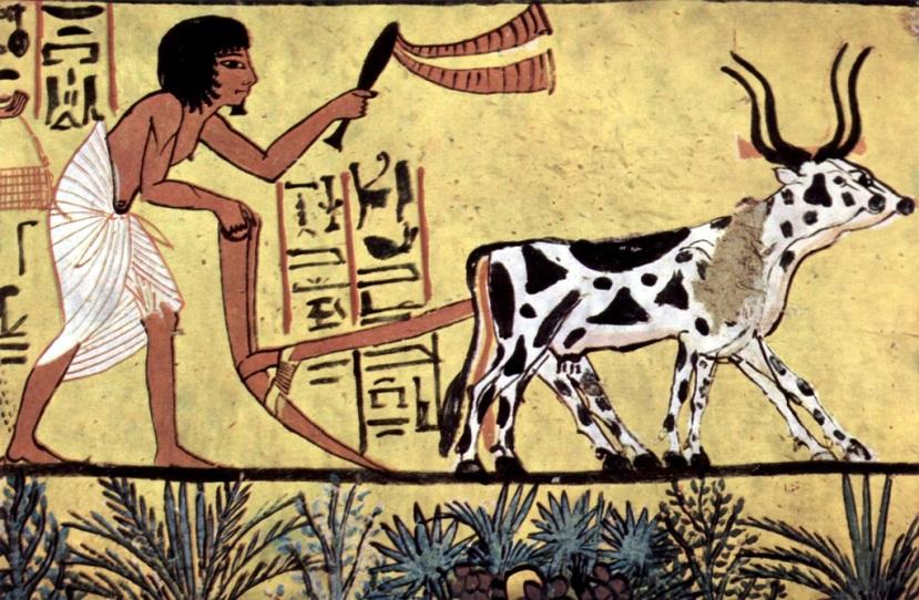 Egypt farmer2