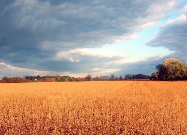 autumn fields 2