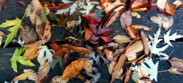 mixed leaves2