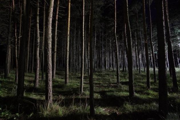dense-forest2a