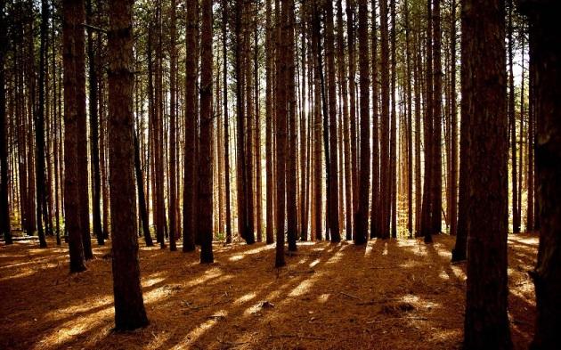 dense forest2b