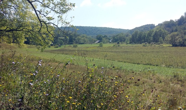 landscape2a