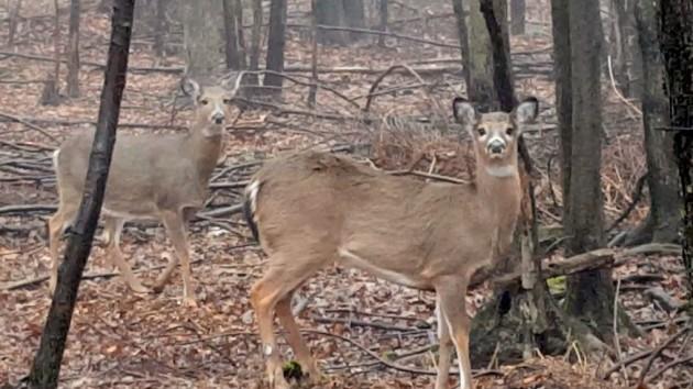 deer22