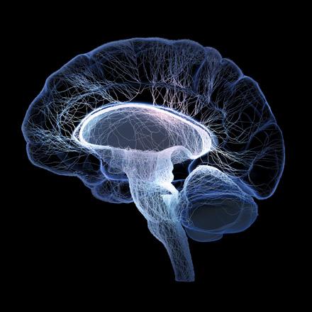 scaNyuEm-brain8