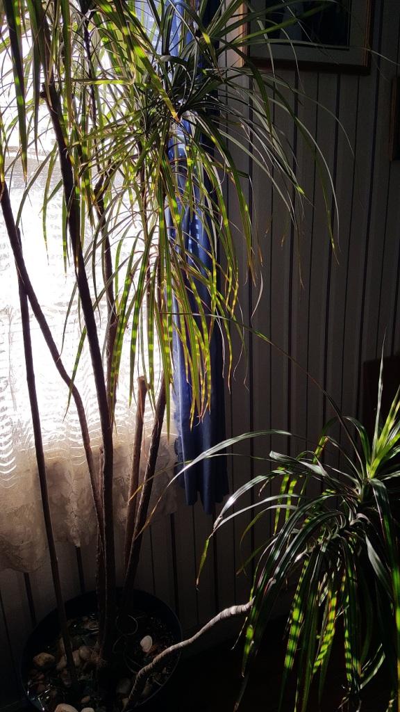 winter window5