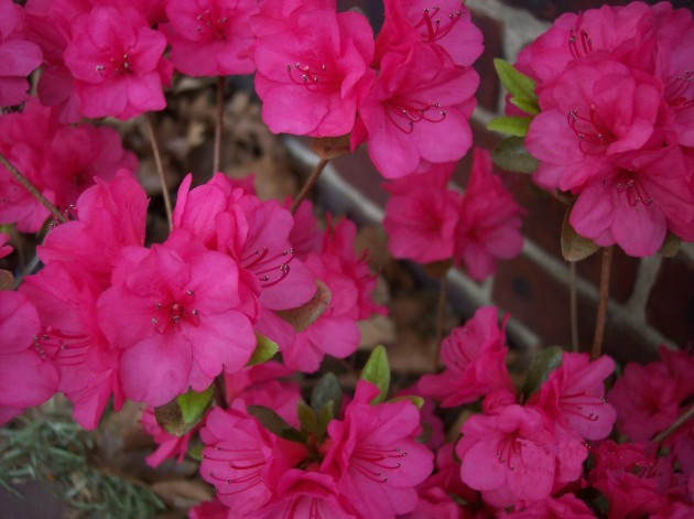 Flowers 002a
