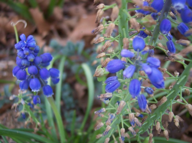 Flowers 009a